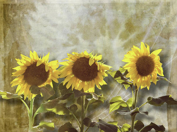 Photograph - Three In The Sun by Melinda Ledsome