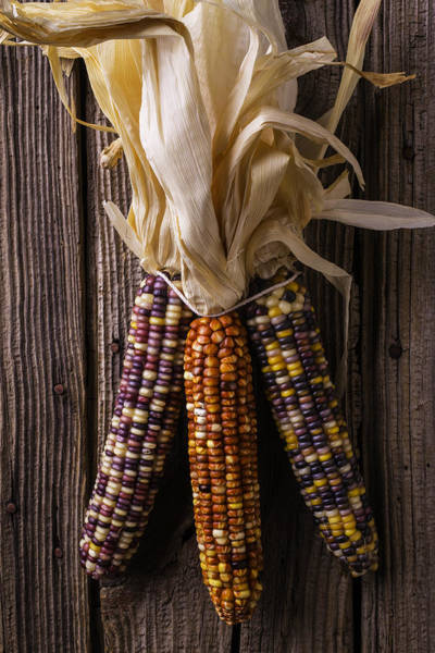 Indian Corn Photograph - Three Indian Corn by Garry Gay