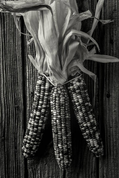 Indian Corn Photograph - Three Indian Corn In Black And White by Garry Gay
