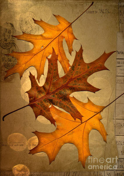Fall Wall Art - Digital Art - Three by Jan Bickerton