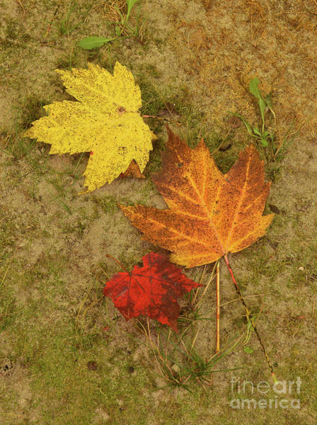 Photograph - Three Leaves by Charles Owens