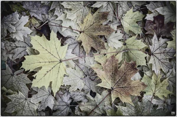 Three Leaves Art Print