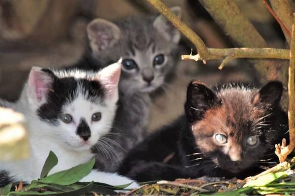 Wall Art - Photograph - Three Little Kittens by Mary Ann Artz