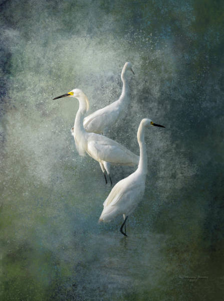 Egret Photograph - Three Of A Kind by Marvin Spates