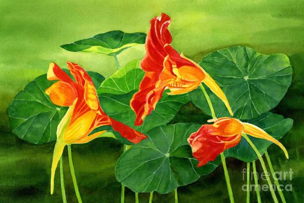 Nasturtiums Wall Art - Painting - Three Orange Nasturtiums With Background by Sharon Freeman