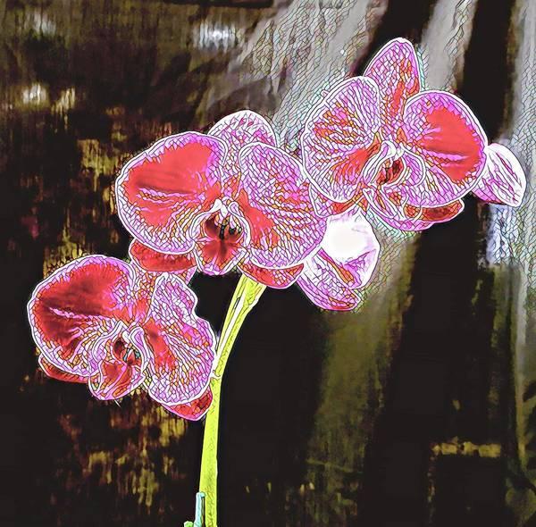 Photograph - Three Orchids Mosaic Aloha  by Joalene Young