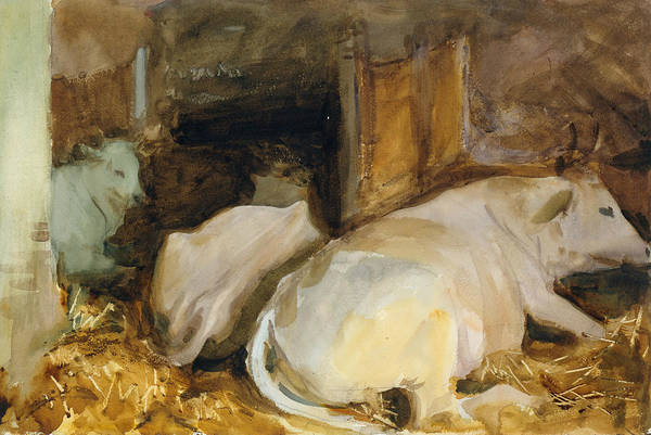 Drawing - Three Oxen by John Singer Sargent