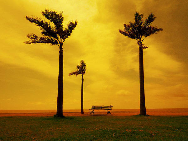 Wall Art - Photograph - Three Palm Trees And A Bench by Osvaldo Hamer