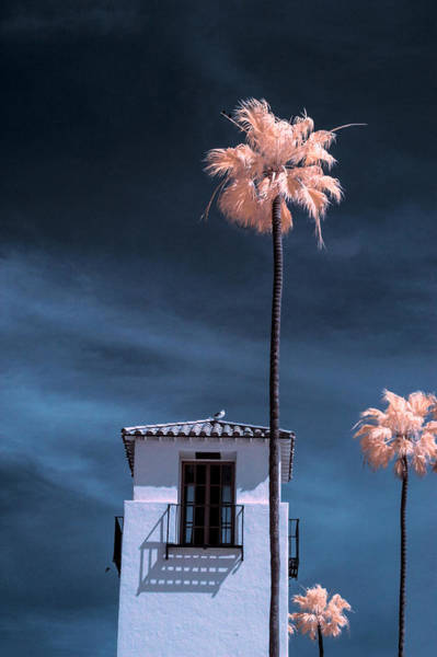 Photograph - Three Palm Trees In Infrared On Cabrillo Beach by Randall Nyhof