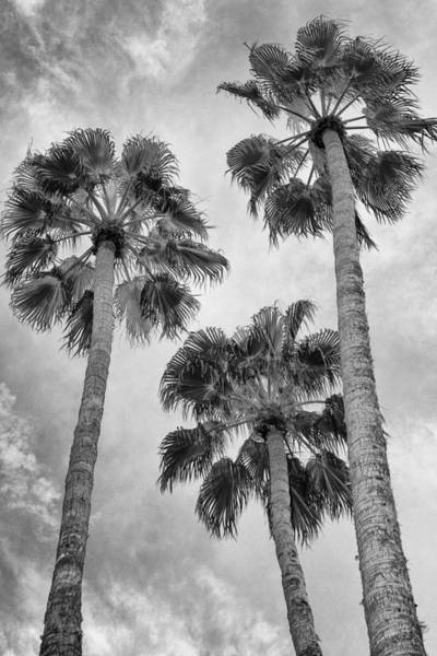 Wall Art - Photograph - Three Palms Bw Palm Springs by William Dey