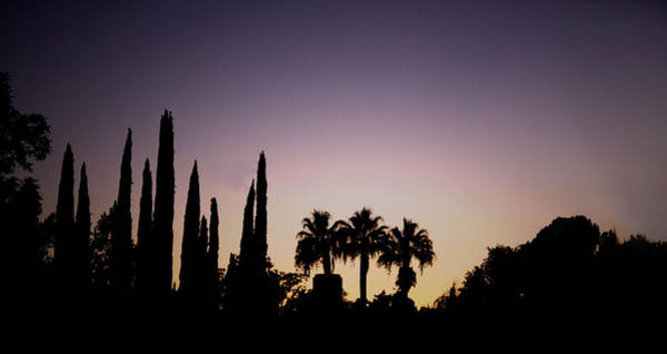 Wall Art - Photograph - Three Palms In California At Sunset by Teresa Mucha