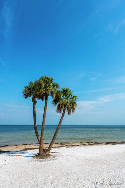 Sun Down Wall Art - Photograph - Three Palms by Marvin Spates