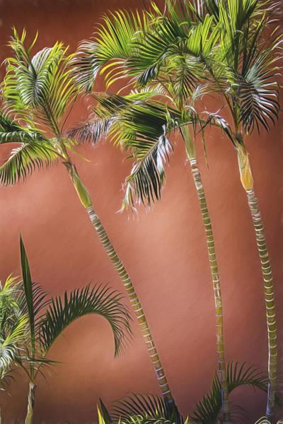 Photograph - Three Palms by Pamela Steege