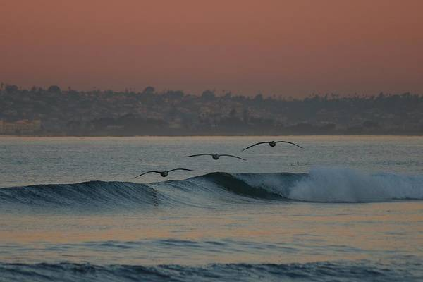 Photograph - Three Pelicans  by Christy Pooschke
