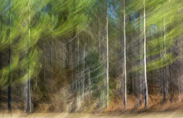 Photograph - Three Pines by Gerald Grow