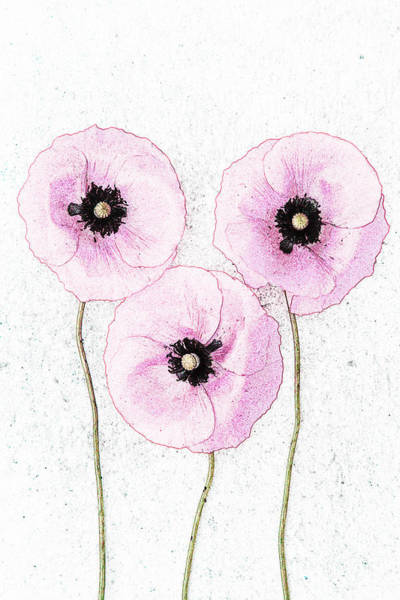 Photograph - Three Pink Poppies by Maria Heyens
