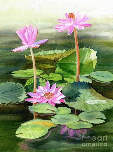 Lilies Painting - Three Pink Water Lilies With Pads by Sharon Freeman