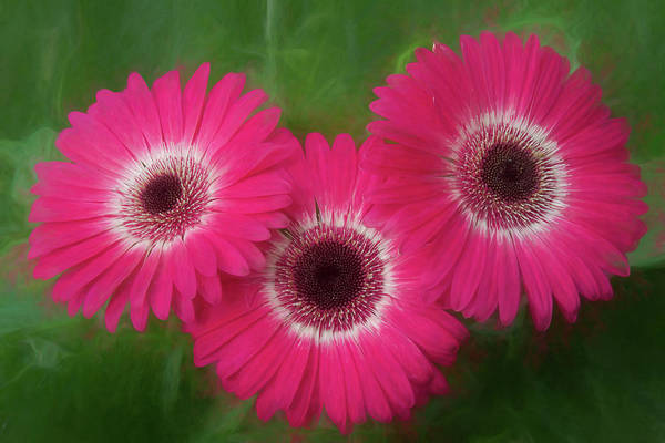 Photograph - Three Pinkies by James BO Insogna