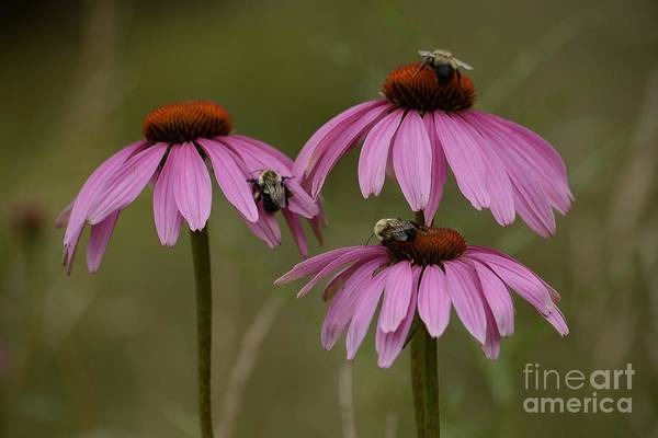 Photograph - Three by Randy Bodkins