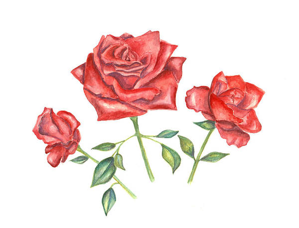 Mixed Media - Three Red Roses by Elizabeth Lock