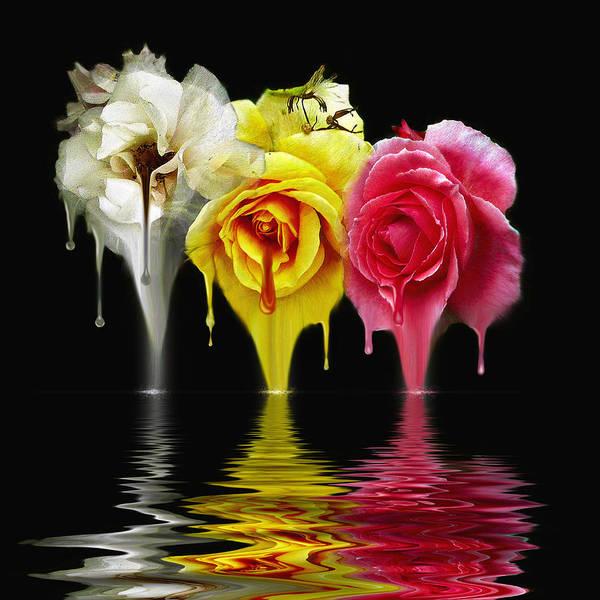 Tears Of Roses Art Print