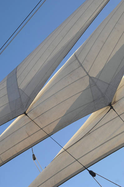 Photograph - Three Sails by David Shuler
