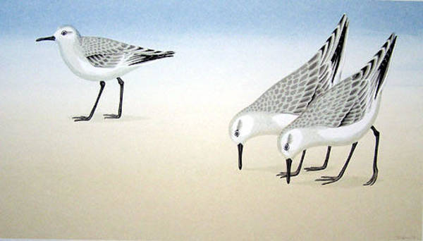 Wall Art - Painting - Three Sandpipers by Grose