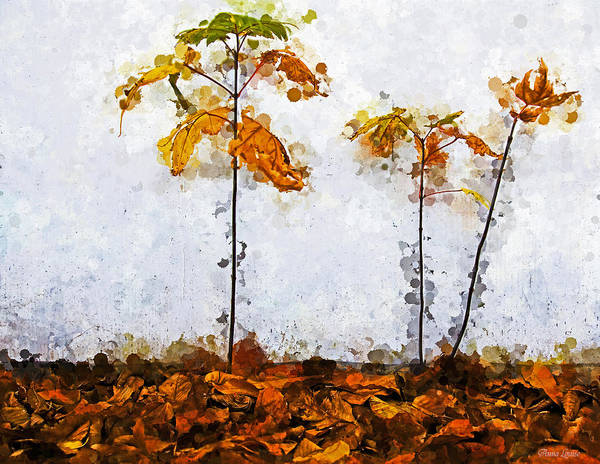 Photograph - Three Saplings by Anna Louise