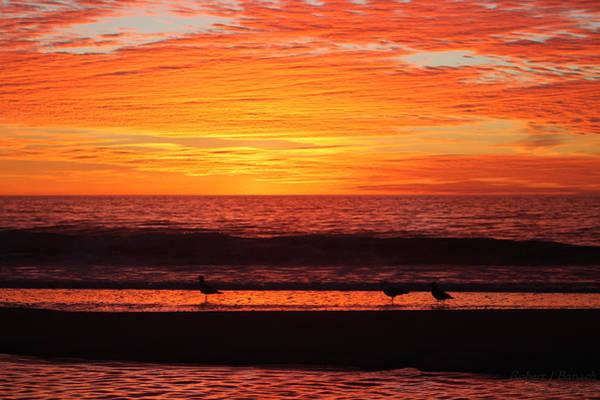 Photograph - Three Seagulls At Sunrise by Robert Banach