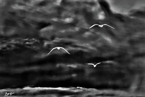 Three Seagulls Art Print