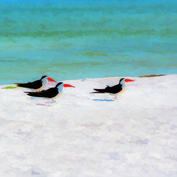 Skimmers Photograph - Three Skimmers by Marvin Spates