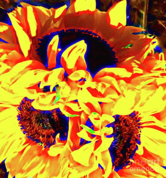 Wall Art - Photograph - Three Sunflowers by Jerome Stumphauzer