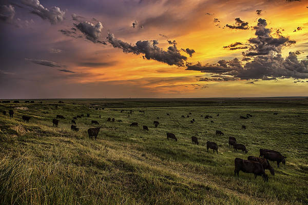 North Dakota Photograph - Three by Thomas Zimmerman