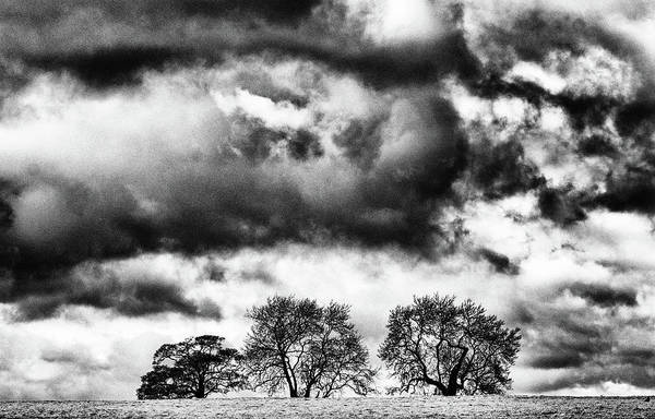 Photograph - Three Tree Tops Landscape by Cliff Norton