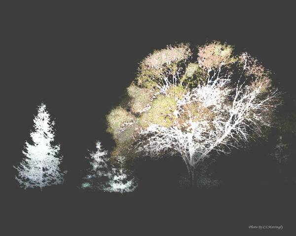 Three Trees In The Dark Art Print