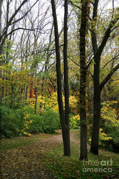 Photograph - Three Trees by Karen Adams