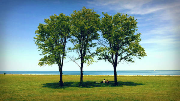 Photograph - Three Trees Lake Shore by Patrick Malon