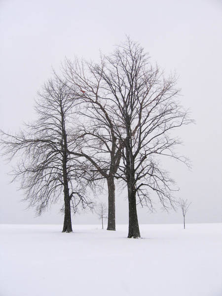 Photograph - Three Trees by Laura Kinker