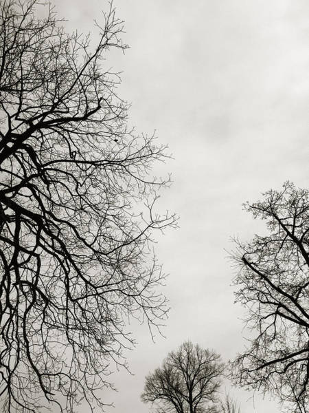 Photograph - Three Trees by Linda Woods