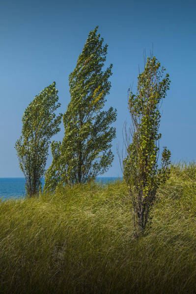 Photograph - Three Trees On Top Of A Grassy Dune by Randall Nyhof