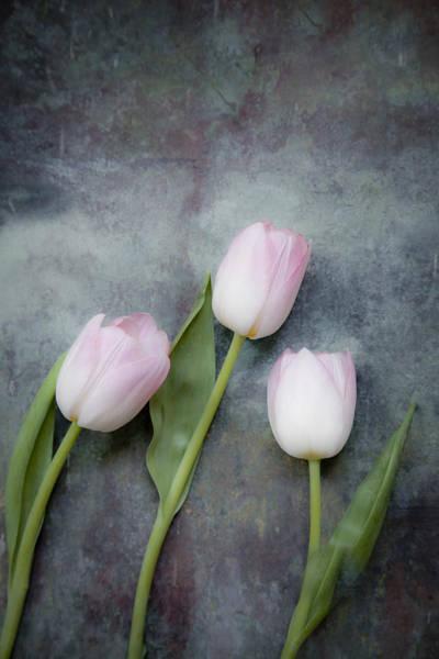 Photograph - Three Tulips by Maria Heyens