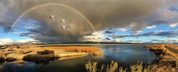 Marsh Bird Digital Art - Three Tundra Swans And A Rainbow by John Williams