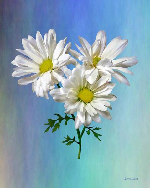 Photograph - Three White Daisies by Susan Savad