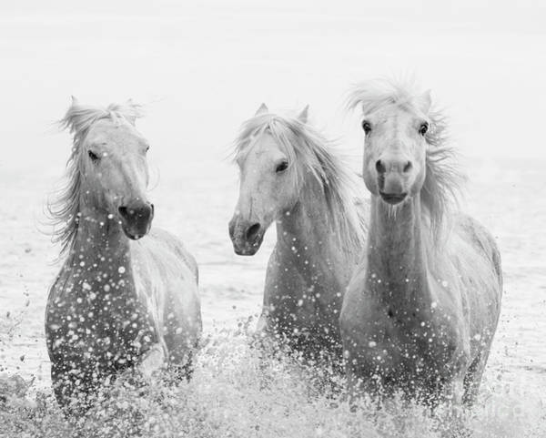 Wall Art - Photograph - Three White Horses Splashing by Carol Walker