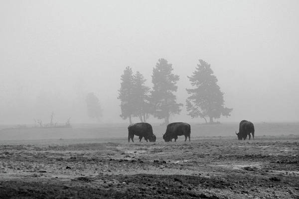Photograph - Threes In The Fog Black And White by Bruce Gourley