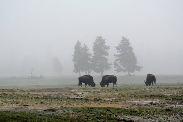 Photograph - Threes In The Fog by Bruce Gourley