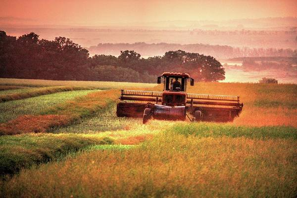 Swathing On The Hill Art Print