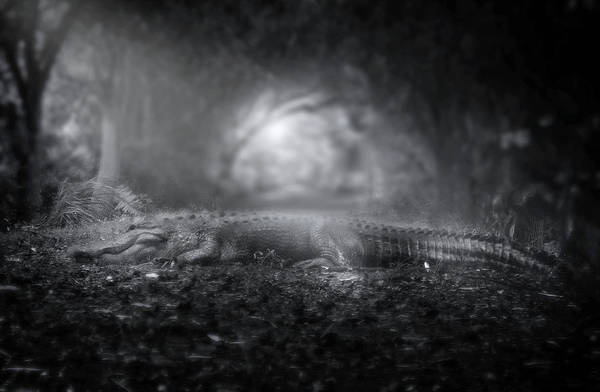 American Crocodile Photograph - Throne Of The Swamp King by Mark Andrew Thomas