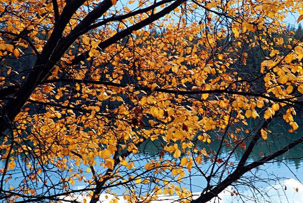 Photograph - Through Autumn Leaves by Larry Ricker