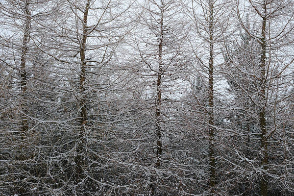Nottinghamshire Photograph - Through Snow Laden Trees by Chris Dale